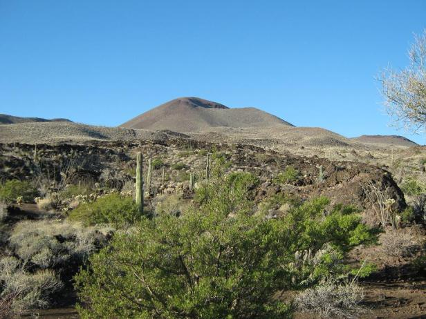 pinacate8